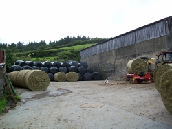Silage bales ready for wrapping