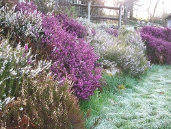 Waterleat Lodge heathers